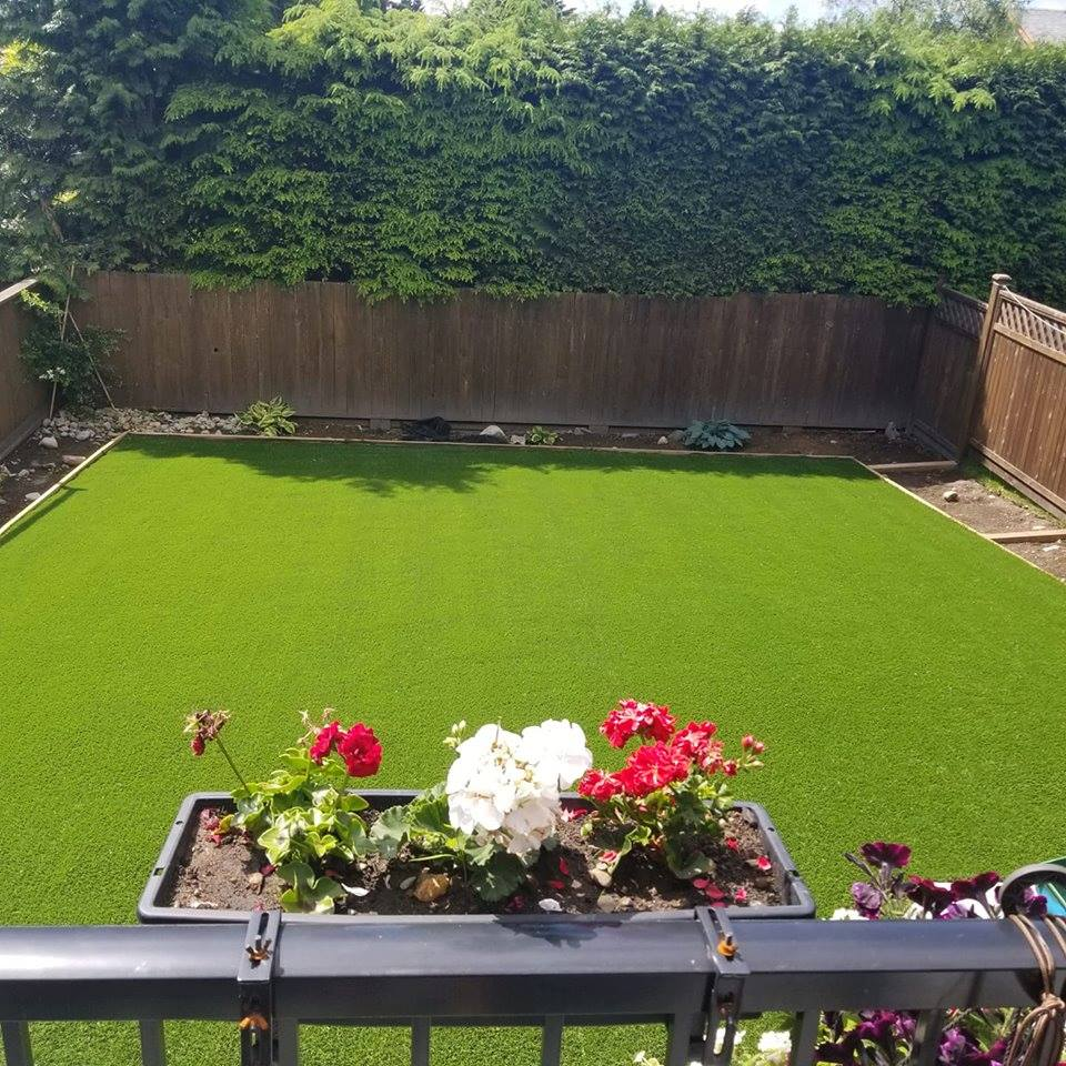 green,plants, flowers,, new, garden, lawn, artificial lawn, sunny