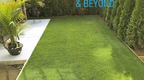 green, grass, sun, outdoors, garden.