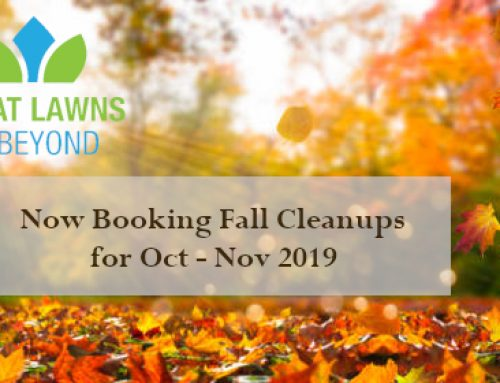 Booking Fall Clean up.